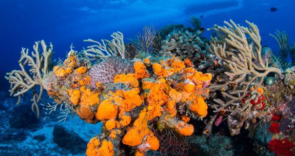 Colorful orange sponge