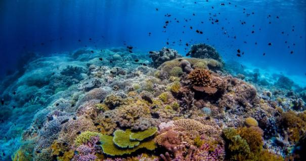 best diving spots in southeast asia