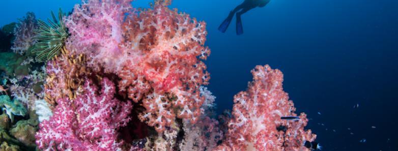 Scuba dive Papua New Guinea
