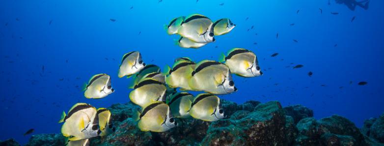 socorro island diving