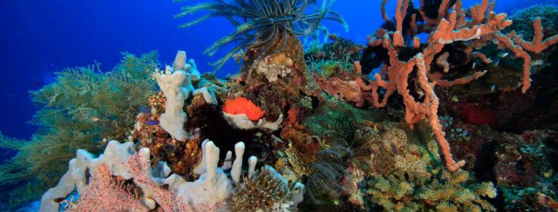 Romblon marine life