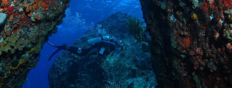 british virign islands diving