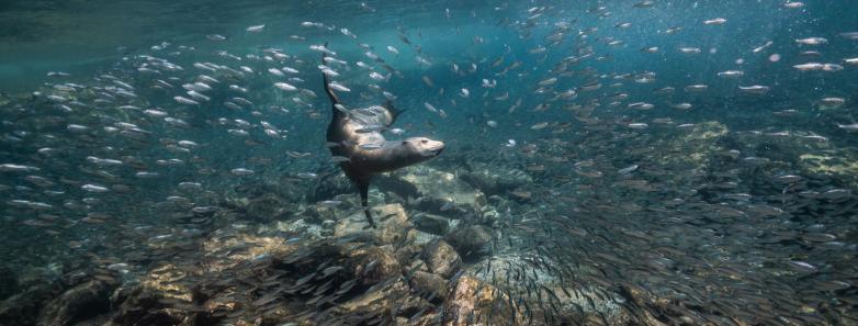 Explore Baja 2022