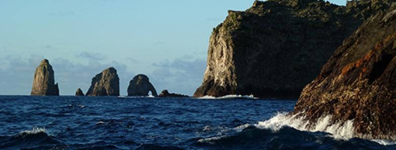 Malpelo Dive Travel Guide Malpelo Liveaboards And