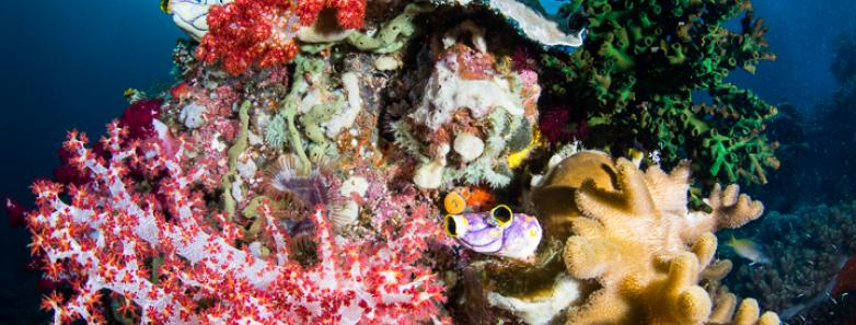raja ampat best diving