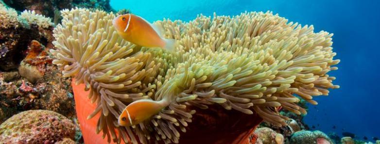 Scuba Diving Micronesia