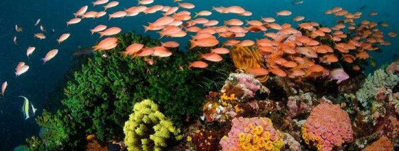 anilao scuba diving