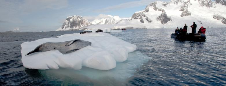 scuba diving antarctica