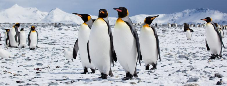 antarctica diving
