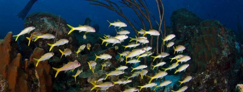 Diving Bonaire Price Bonaire Scuba Dive Travel