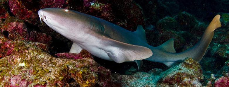 best dive sites in Bonaire