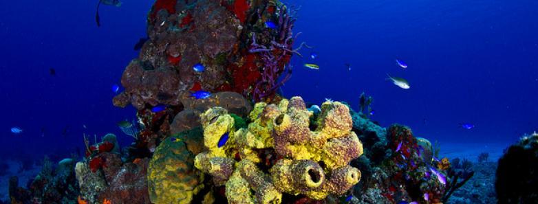 Roatan dive resorts