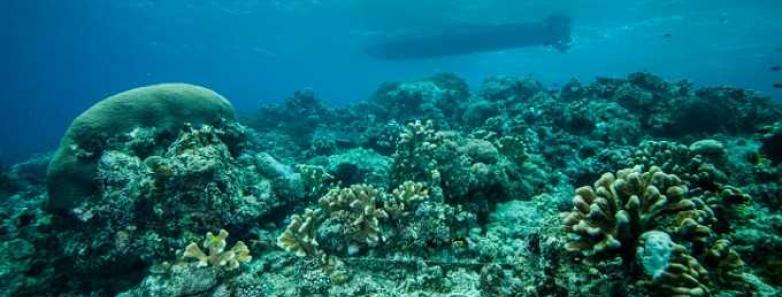 derawan islands diving