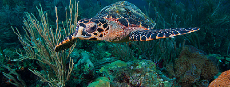 st. vincent and grenadines diving