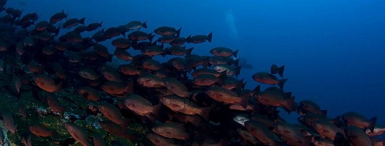 scuba diving in malpelo islands