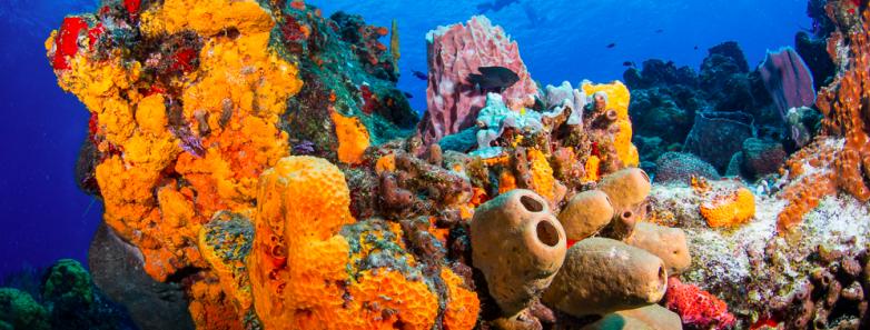 diving yucatan