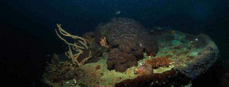 coron scuba diving