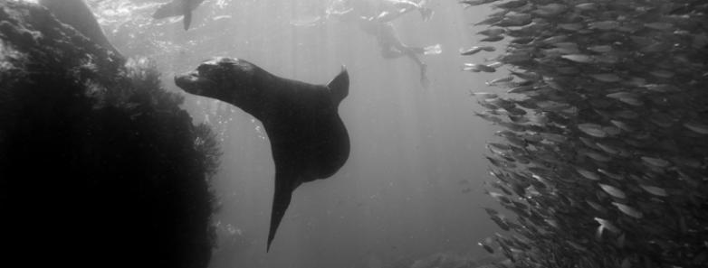 Scuba Diving in La Paz