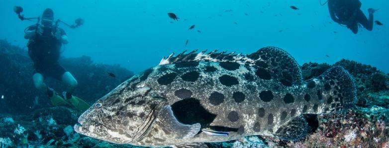 Tanzania diving